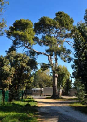 Seaside holiday - Nature campsite Provence
