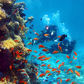 Scuba Diving Groups at the Campsite