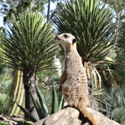 Visit the Tropical Zoological Garden in La Londe-les-Maures with all the family!