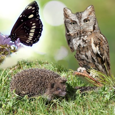 Campsite fauna
