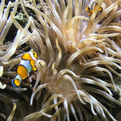 A day out at the Oceanographic Museum in Monaco during your camping break